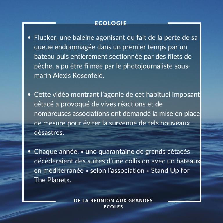 Écologie :  https://www.leparisien.fr/environnement/fluker-la-baleine-sans-queue-est-a-l-agonie-24-07-2020-8357961.php#xtor=AD-1481423552